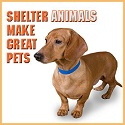 Shelter Animals